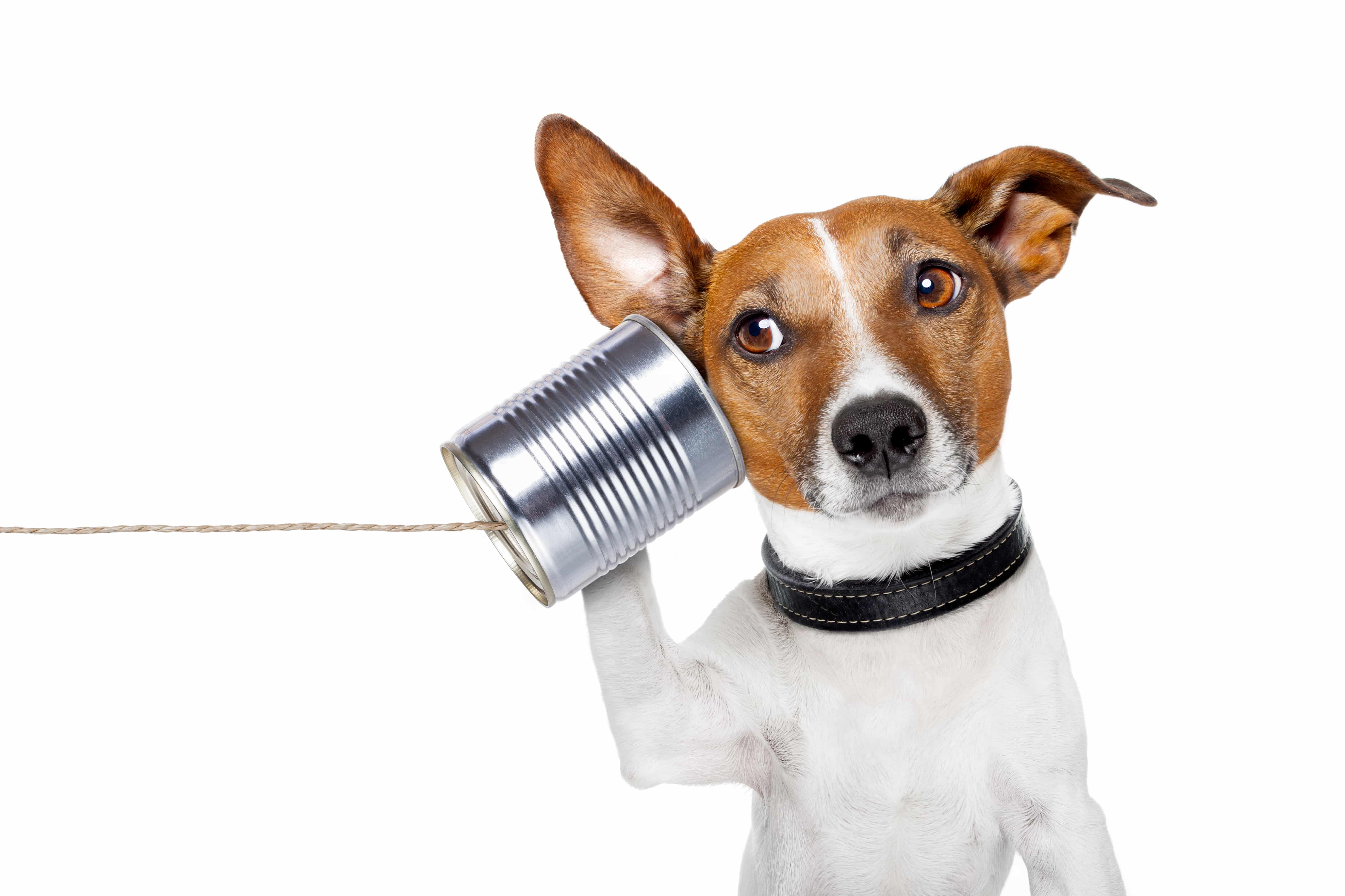 Communicating Effectively is key to understanding - Susan Fitzell